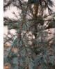 Искусственная елка Black Box Лиственница 215 см зеленая