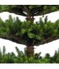 Искусственная елка Black Box Смолянистая 185 см зеленая