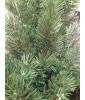 Искусственная сосна Триумф Денвер Triumph Tree